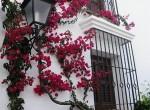 Flores de Villacana1